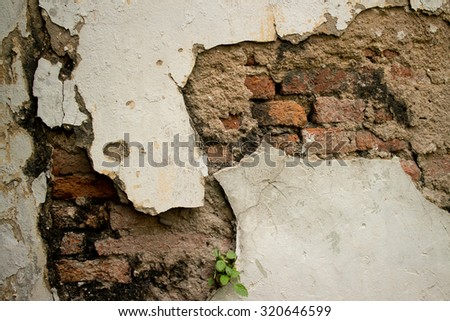 Eroded Textured Stucco Vintage Colonial Wall  in Asia with multiple Materials and Layers. Old brick, broken chipped stucco, broken mortar and vegetation all can be found in this architectural detail.