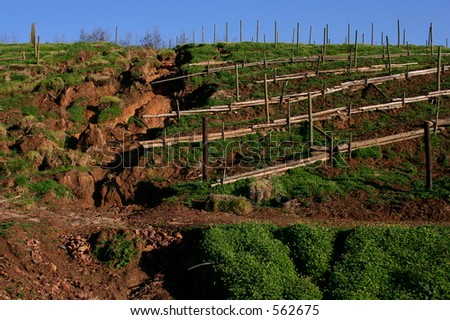 Erosion - stock photo