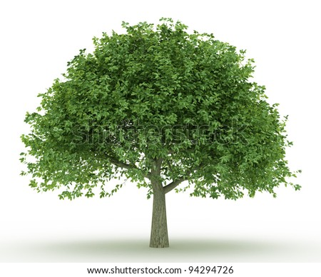 erythrina trees collection isolated on white background