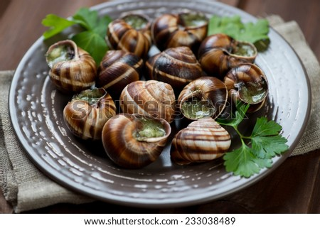 Escargots de Bourgogne, close-up, studio shot