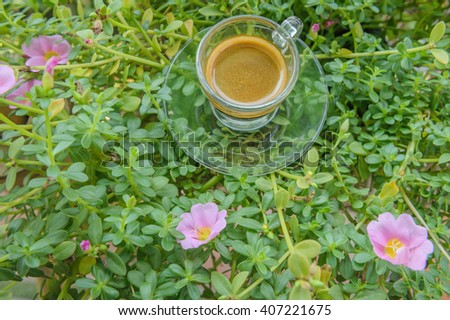 Espresso coffee in glass cup on portulaca flower - stock photo