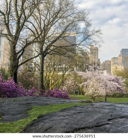 Esrly spring Central Park, New York City in the early morning - stock photo