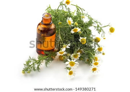 Essential aroma oil with camomile on white  background. Selective focus. - stock photo