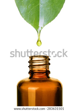 Essential oil dropping from leaf to the bottle. Essence liquid cosmetic. Perfume.Aromatherapy. Isolated on white. - stock photo
