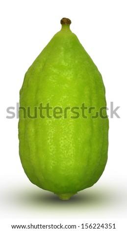 etrog - esrog, citron or Citrus medica used by Jews on the holiday of Sukkot.  - stock photo