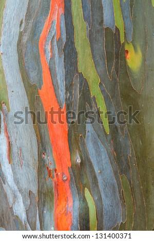 Eucalyptus bark texture abstract background - stock photo