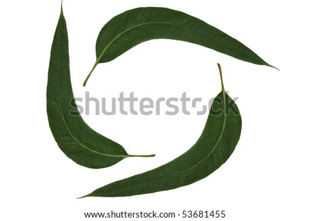 Eucalyptus leaves form the symbol of recycling and waste - stock photo