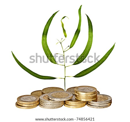 Eucalyptus sapling growing from pile of coins