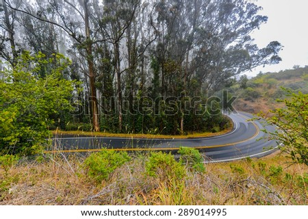 Eucalyptus trees line a wet road with fog in the background - stock photo