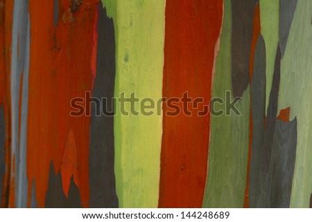 Eucalyptus wood - stock photo