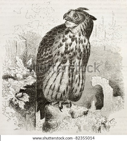 Eurasian Eagle-owl old illustration (Bubo bubo). Created by Kretschmer and Wendt, published on Merveilles de la Nature, Bailliere et fils, Paris, 1878