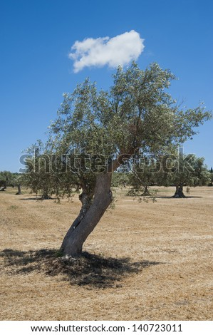 europe, italy, sicily, ragusa, scicli, country landscape in sicily - stock photo