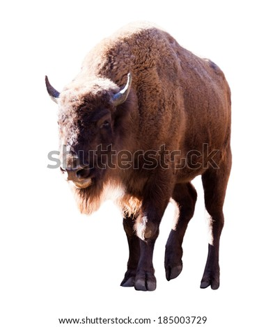 European bison. Isolated over white background - stock photo