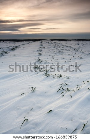 european field landscape at winter
