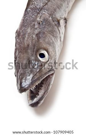 European Hake fish-Merluccius merluccius isolated on a white studio background. - stock photo