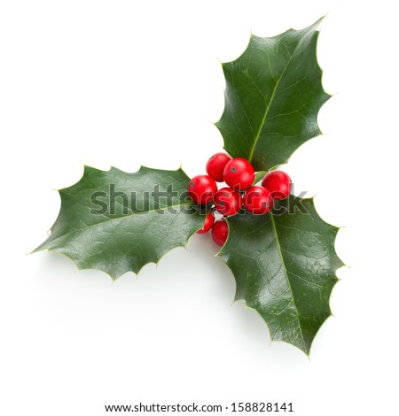 European Holly (Ilex aquifolium) leaves and fruit - stock photo
