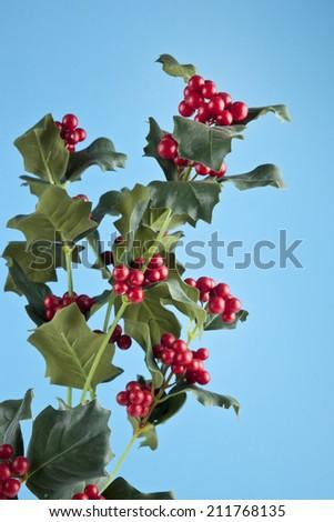 European Holly (Ilex aquifolium) leaves and fruit - stock photo