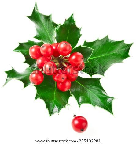 European holly ilex christmas decoration isolated on white background - stock photo