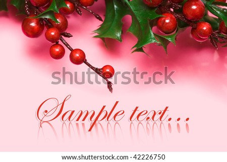 european holly on pink background