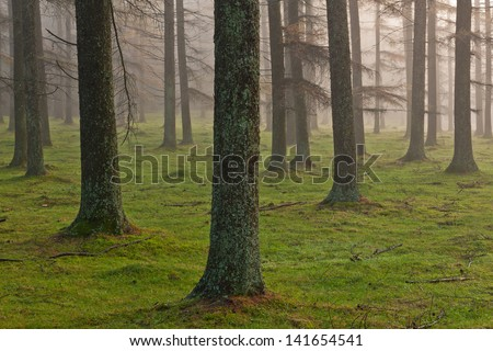 European larch forest, Gorbea Natural Park, Bizkaia, Spain - stock photo