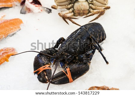 European lobster(Homarus gammarus) - stock photo