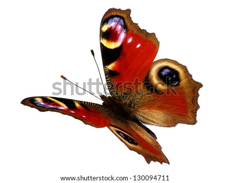 European Peacock butterfly (Inachis io) in flight - stock photo