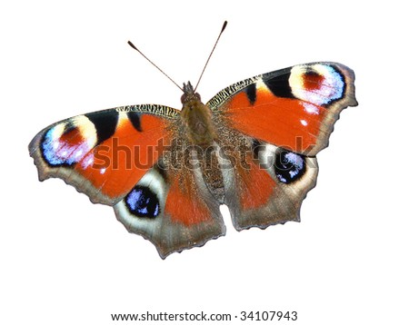 European Peacock butterfly (Inachis io) isolated on white - stock photo