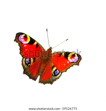 European Peacock butterfly (Inachis io), white isolated - stock photo