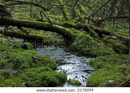 European rain-forest with fungi and peat and mosses. Jutland, Denmark - stock photo