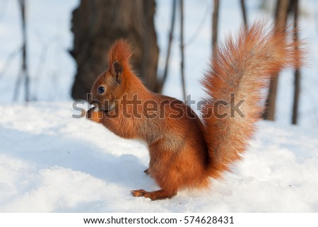 squirrel hindu singles 100% free online dating for squirrel singles at mingle2com our free personal  ads are full of single women and men in squirrel looking for serious.
