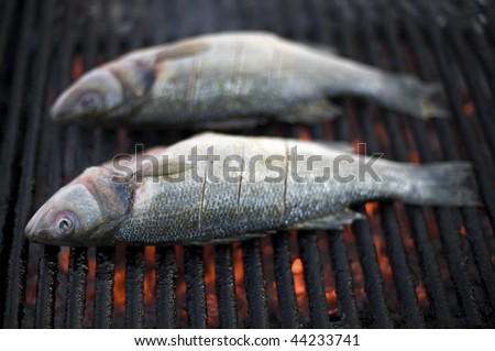 European sea-bass on outdoor grill - BBQ - stock photo