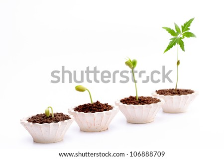 Evaluation Process-Stages of the plant development