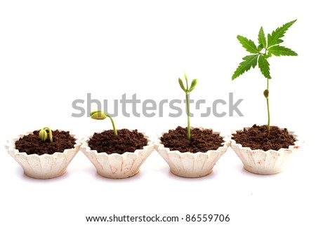 Evaluation Process-Stages of the plant development - stock photo
