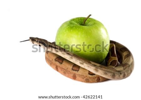 Eve temptation by snake with green apple. - stock photo