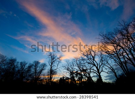 Evening above the forest - stock photo