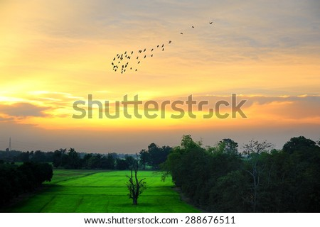 Evening at the field and the birds were flying back to the nest . - stock photo