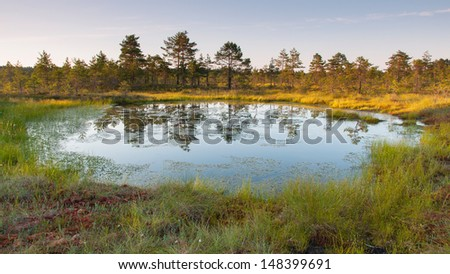 Evening at the sunny bog
