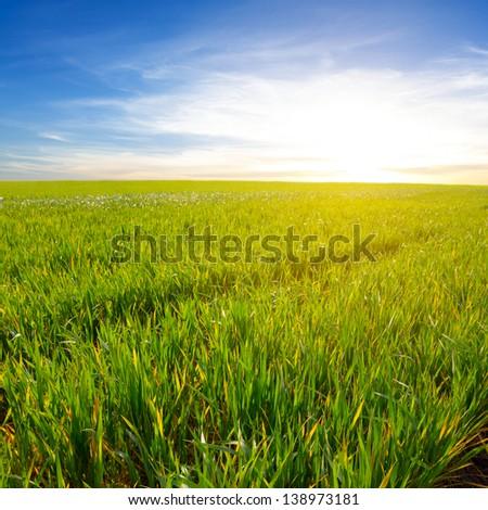 evening fields - stock photo