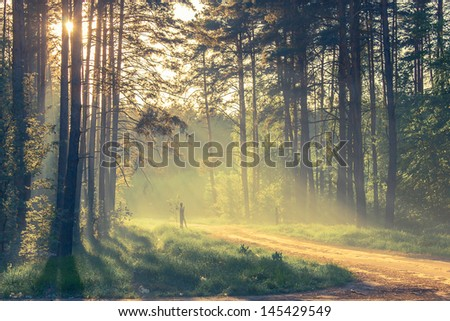 Evening forest with sun and volume light - stock photo
