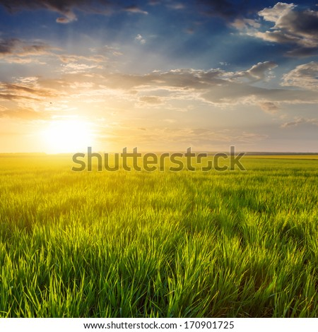 evening green fields - stock photo