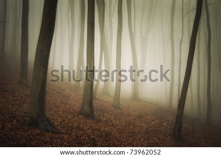 evening in a colorful forest with mist - stock photo