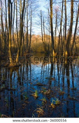 Evening in flooded oak forest at spring time - stock photo