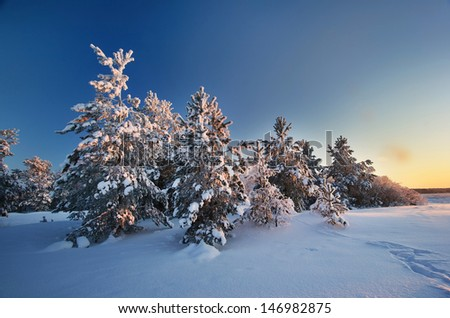 Evening landscape in winter - stock photo