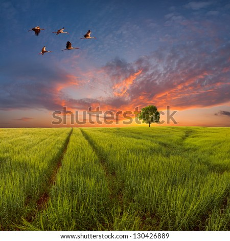 Evening landscape with a green field and the road, a tree on the horizon and birds in the sky against a majestic decline - stock photo