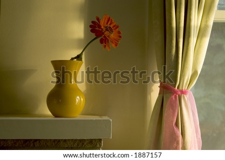 Evening light on a flower. - stock photo