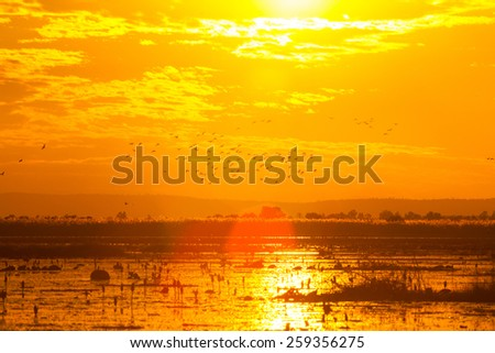 Evening light over the lake - stock photo