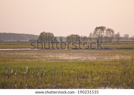Evening on Biebrza swamps,  Poland - stock photo