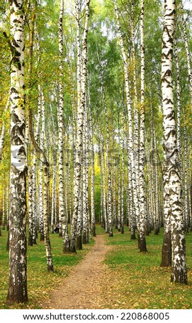 Evening pathway in the autumn birch grove  - stock photo