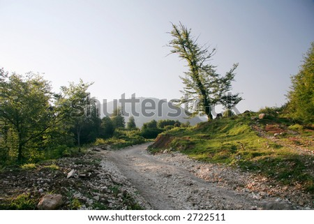 evening road and tree - stock photo