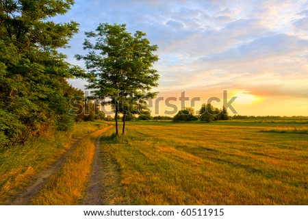Evening scene in steppe